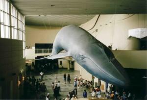 Blauwalmodell